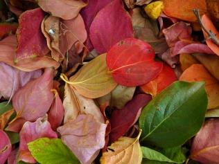 Autumn colours are...