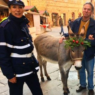 ...a festive donkey (bellissima Nuvola***)